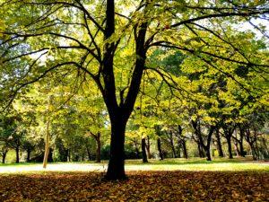 Autunno Al Parco Primo Maggio