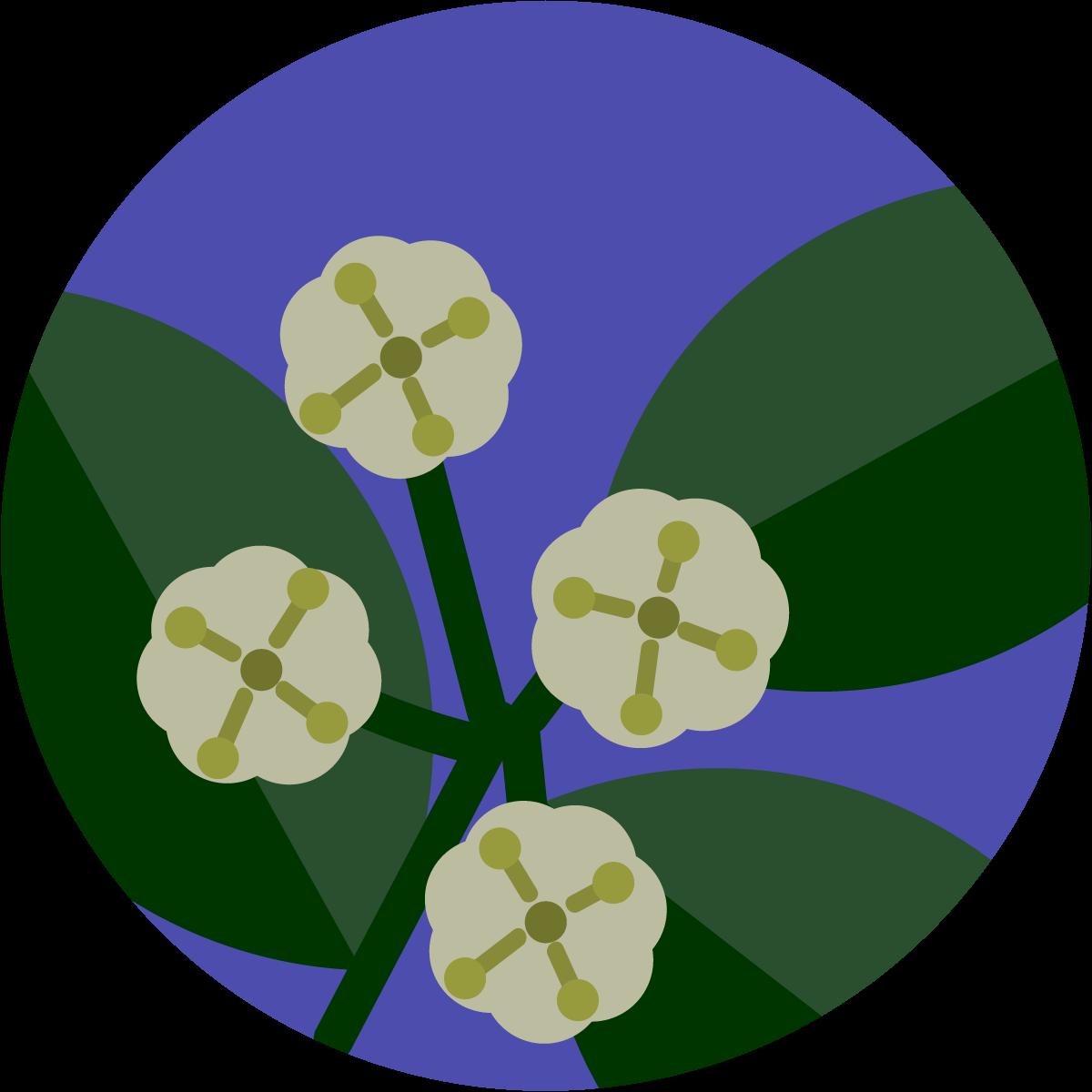 ligustro